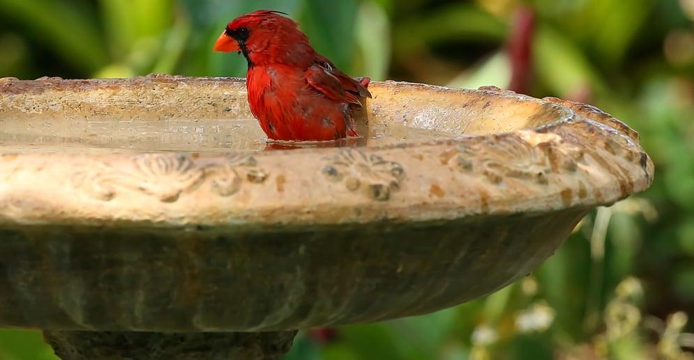 best birdbaths