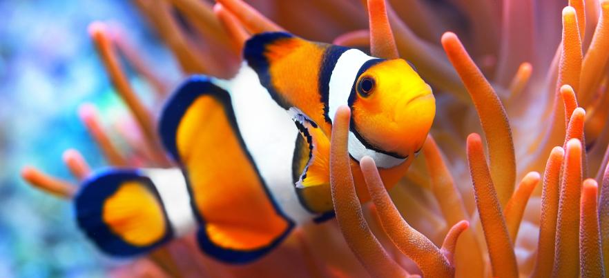 live aquarium cams