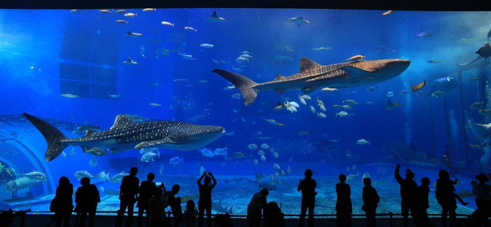 live aquarium cameras
