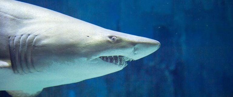 live shark cams