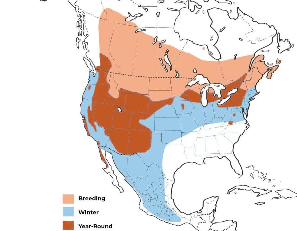 long eared owl range map