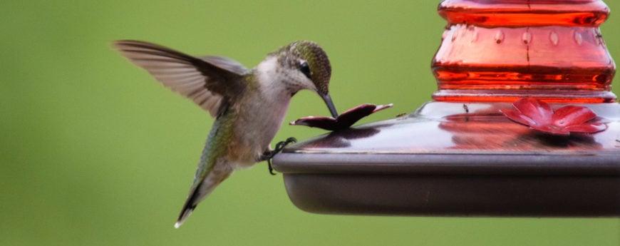 cleaning hummingbird feeders