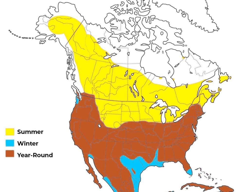 american kestrel range map