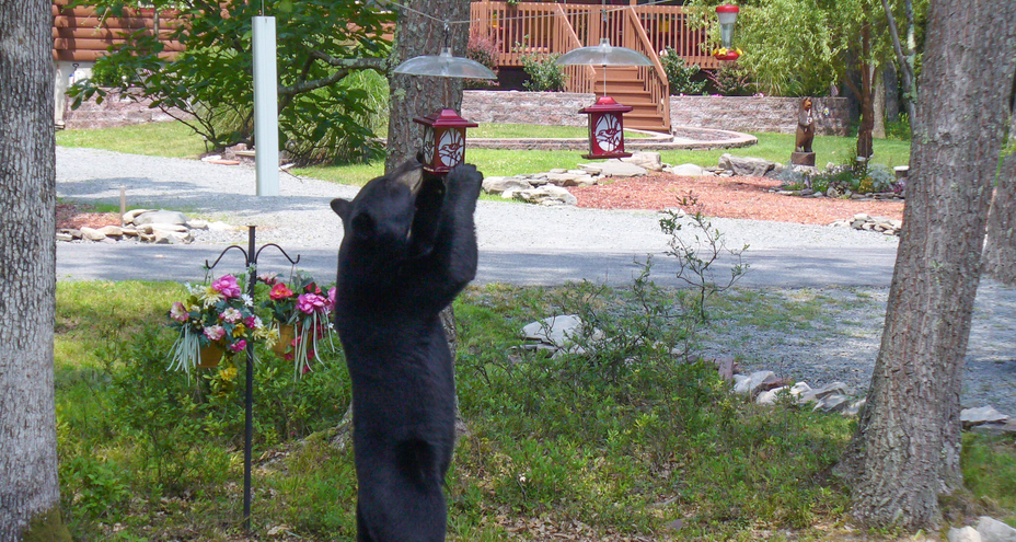 protect bird feeders from bears
