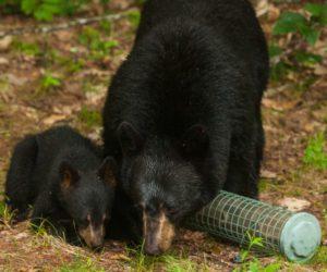 8 Ways to Keep Bears AWAY From Bird Feeders! (2020)