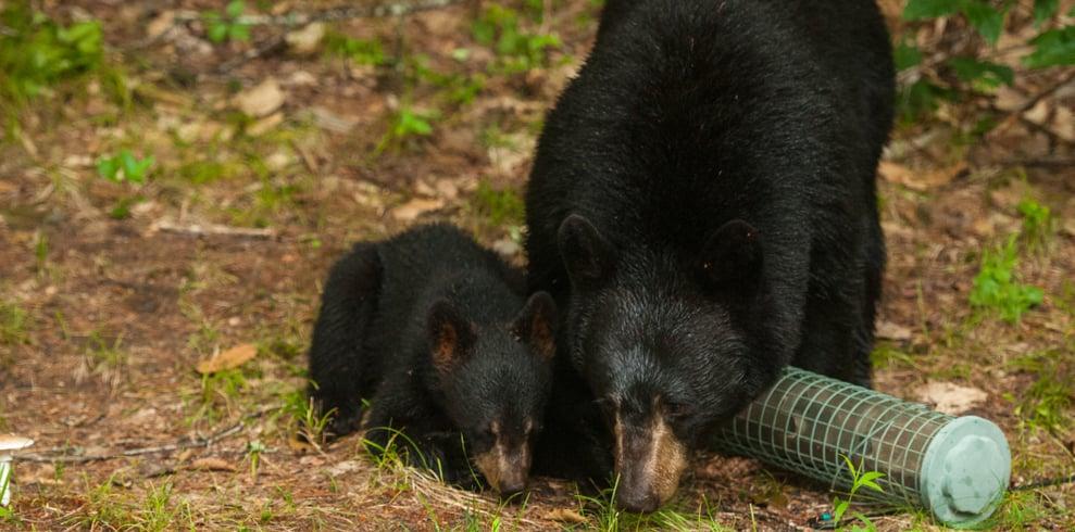 how to keep bears away from bird feeders