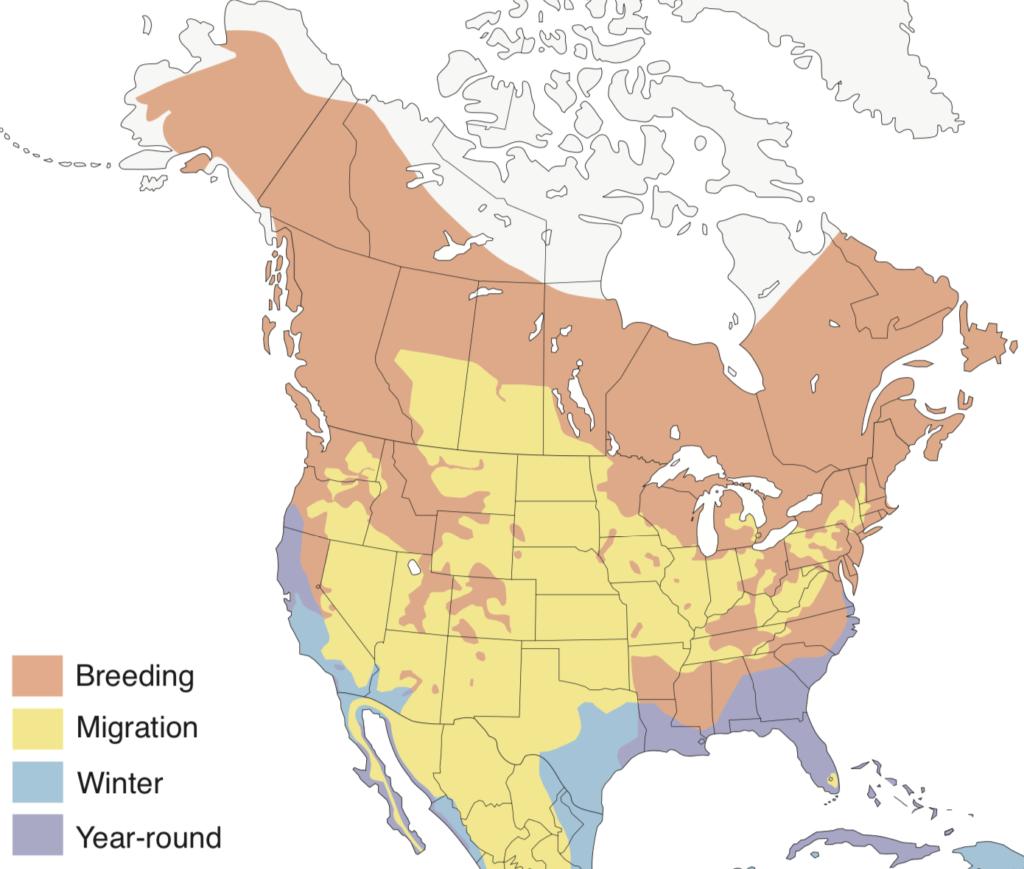 Osprey Range Map