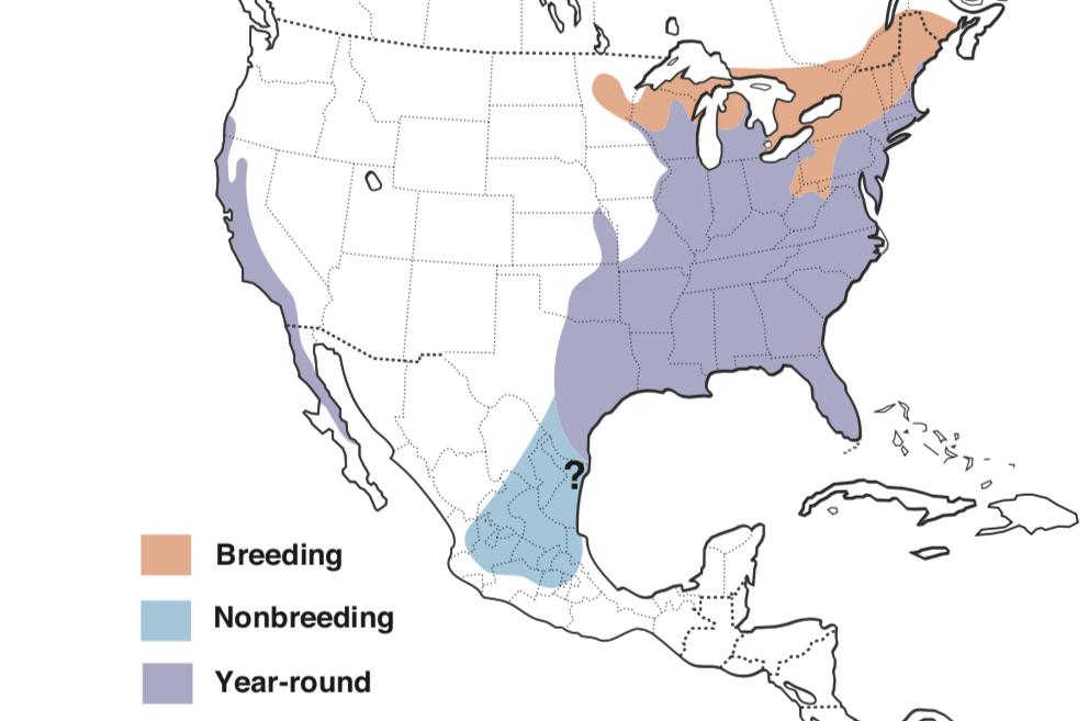 Red-shouldered Hawk Range Map