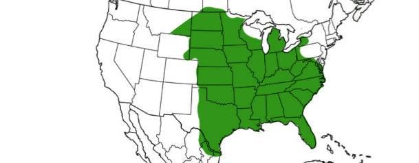 fox squirrel range map