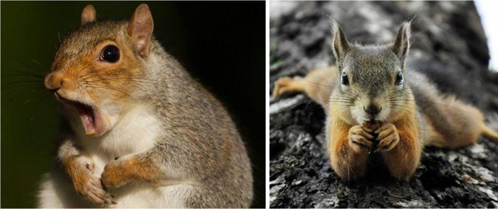 common squirrels in colorado